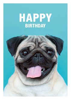 The 144 Best Happy Birthday Pug Images On Pinterest