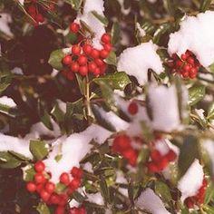 Merry Christmas, Xmas, North Carolina Cabins, Reindeer, Snowman, Star Wars, Winter, Gingerbread, Elf