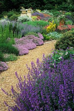 Dry garden with Lavender thyme and drought resistant plants John Glover Photography Drought Resistant Plants, Plants, Beautiful Gardens, Dry Garden, Gorgeous Gardens, Xeriscape, Garden Photography, Outdoor Gardens, Cottage Garden