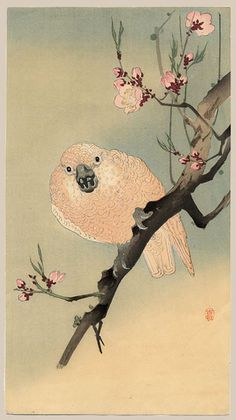 """""""A Parrot on a Blossoming Plum Branch"""" by Koson"""