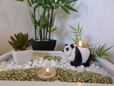 Partylite, Earth Hour, Bright Homes, Deco, Planter Pots, Plants, Peace, Round Round, Deko
