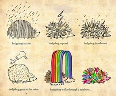 Hedgehog, in all weathers. :) @Harriet Lawrence...this makes me smile.  Hedgehog in the rain is definitely me.