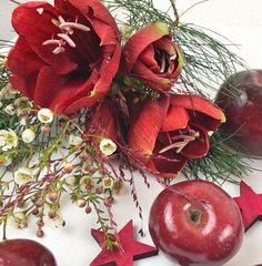 Deko zur Weihnachtszeit mit Amaryllis und roten Äpfeln