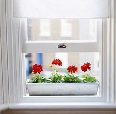 Beauty Indoor window boxes