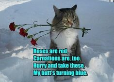 valentines day cat jokes