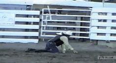 acidente de touro gifs - Pesquisa Google