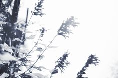 Flores en blanco y negro en el Jardín Botánico de Buenos Aires Floral, Pastel, Abstract, Artwork, Flower Photos, Buenos Aires, Black And White, Naturaleza, Gatos