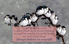 A bird sitting on a tree is never afraid of the branch braking, because her trust is not on the branch but on it's own wings. Always believe yourself. #Confidence #Coaching #Success www.Your24hCoach.com