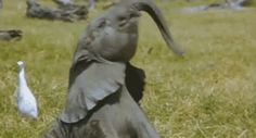 """<b>Between <a href=""""http://www.cnn.com/2014/06/15/world/africa/kenya-satao-famous-elephant/"""">poaching</a> and their treatment at <a href=""""http://www.buzzfeed.com/mjs538/things-you-never-knew-about-circuses"""">circuses</a>, elephants are up against a lot.</b> Here"""
