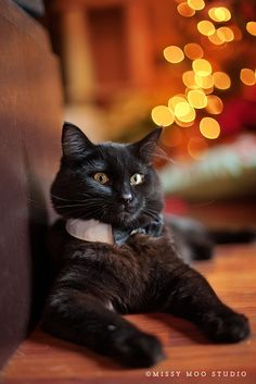 Dash looks Dashing   He's ready for New Years Eve