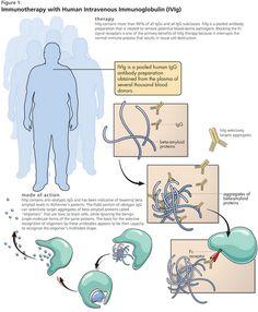 Immunoglobulin G deficiency | Genetic and Rare Diseases ...