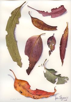 Eucalyptus leaves - Helen Fitzgerald