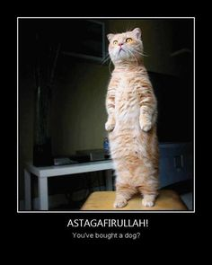 Some Muslim and kitty humor :3