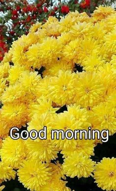 Morning Greetings Quotes, Morning Quotes, Gm Images, Good Morning Beautiful Flowers, Glitter Flowers, Good Morning Images, Corporate Gifts, Blessed, Blessings