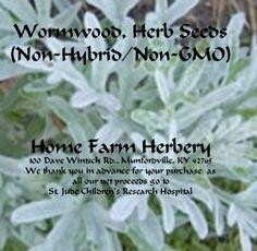 Wormwood, Herb Seeds Medicinal (Non-Hybrid/Non-GMO