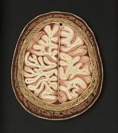 Cranium | Created by Lisa Nilsson