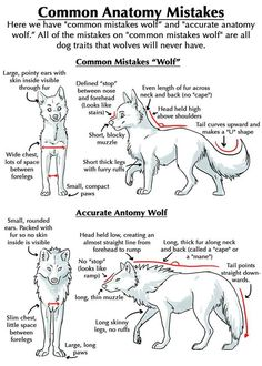 Pencil Drawings Tutorials wolf anatomy (>>>they also made the eyes more cartoony on the first version. changing more than the discussed variables, boooo! Animal Sketches, Animal Drawings, Art Drawings, Wolf Drawings, Drawing Animals, Drawing Art, Figure Drawing, Cross Drawing, Drawing Faces