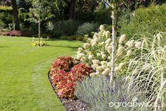 Zimozielony ogród przy białym domu - strona 232 - Forum ogrodnicze - Ogrodowisko