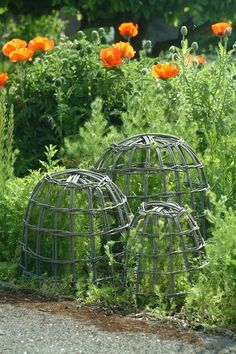 Willow garden cloches protect plants from animals, and provide support to plants that need a little protection from the wind or a place to climb. Don't have willow but will try with some of my branches. Garden Crafts, Garden Projects, Garden Art, Amazing Gardens, Beautiful Gardens, Garden Cloche, Willow Garden, Potager Garden, Plant Supports