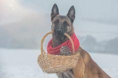 Ingo-koira ja Napoleon-pöllö ovat kamuja – saksalaiskuvaajan hellyttävät eläinkaverikuvat leviävät netissä - Valokuvaus - Nyt