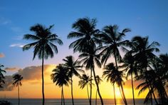 Landscape of Palm Trees on The Beach When The Sunset