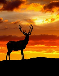 golden-quill:  King of the Hill | dudz007