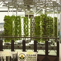 Tower Garden At Chicago Ou0027hare Airport. Grow Good Health My Friends. #