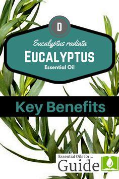 Eucalyptus #essentia
