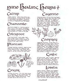 Wiccan Nine Healing Herbs www.psychickerilyn.com www.facebook.com/PsychicKerilyn