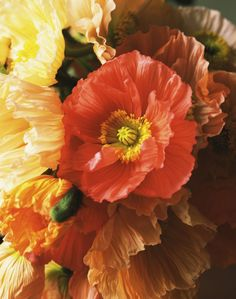 Poppies are bold, but also delicate. To expend the papery flower's vase life, seal the cut end of the stem by quickly singeing with an open flame.