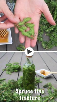 This homemade Spruce tips tincture provides a burst of energy in a small portable bottle that helps remove toxins from the body and strengthens your immune system. Healthy Diet Tips, Good Health Tips, Healthy Life, Healthy Living, Health Advice, Healthy Food, Healthy Recipes, Herbal Tinctures, Herbalism