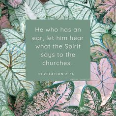 """""""He who has an ear, let him hear what the Spirit says to the churches. To him who overcomes I will give to eat from the tree of life, which is in the midst of the Paradise of God."""" Revelation 2:7 #NKJV  Let's be sure to listen and hear 👂 . I'd be interested to hear your thoughts on the times we're in.🤔 If you would like access to my unlisted YouTube video """"The Lowdown on Lockdown"""", please DM me 📬  #Regram via @kates_bookclub Encouraging Verses, Bible Verses, Verses About Love, Revelation 2, Book Club Books, Tree Of Life, Word Of God, Christian Quotes, Paradise"""