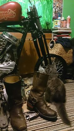 boots, kitty, this looks like our house