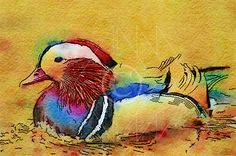 Mandarin Duck (a) - Printable Art, Instant Downloadable Images, Fine Art. by edeblas on Etsy
