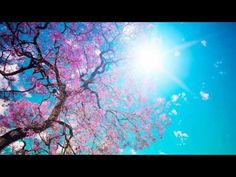 Relaxing Morning music for deep sleeping and stress relief Fall asleep to beautiful nature videos and use the relaxing music as sleeping music, soothing …