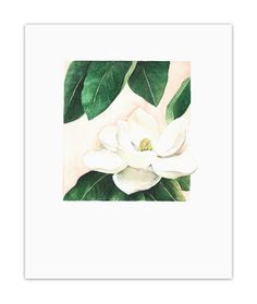 The white magnolia blossom symbolizes beauty and perfection. The emerald green leaves and pale peach watercolor background are certainly a beautiful color combination that makes this piece delicately stunning. It is printed with archival pigment inks on heavyweight, ultra-smooth paper with a matte finish. These high-quality materials create a rich and vibrant print that will last for years and years to come. Signed on the back.  This piece is packed in a cello sleeve and mailed in a rigid…