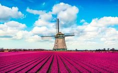 Tulip Fields in Europe Are Where You Should Celebrate Spring | Travel + Leisure