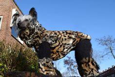 *A+* Leopard faux fur set.