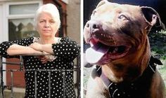 Posted April 22, 2014 Merseyside is a metropolitan county in Northwest England, of which Liverpool is a borough. Owner's of the pit bull breed witnessed their worst nightmare on March 27 as more than 60 officers from the police force's Matrix unit sent on a killing spree.  This system failed horribly in the March 27 raids. Each of those killed had undergone behavior therapy and been deemed not dangerous by the court system. The dogs were spayed/neutered and microchipped and should have been…