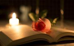 Обои макрос, свет, размытие, цветок, роза, книга, лепестки, свеча, блики