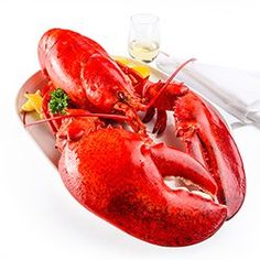 GIANT lobster for sale online, shipped from Maine. We offer 10 lb jumbo lobsters for sale or bigger that are delivered right to your door. Lobster For Sale, Live Maine Lobster, Maine Seafood, Live Lobster, Boiled Lobster Recipes, Order Seafood Online, Turkey Cooker, How To Prepare Lobster