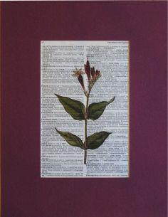 Antique Floral Botanical Matted Dictionary Art Print  https://www.upcyclepost.com/shop/art/1620-antique-floral-botanical-matted-dictionary-art-print.html