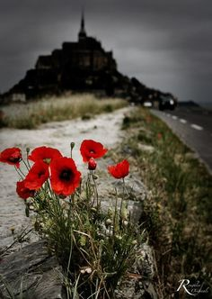 Red Poppies on The Road to Le Mont Saint-Michel, Normandy, France Mont Saint Michel France, Le Mont St Michel, Beautiful World, Beautiful Places, Beautiful Flowers, Flanders Field, Jolie Photo, France Travel, Red Poppies