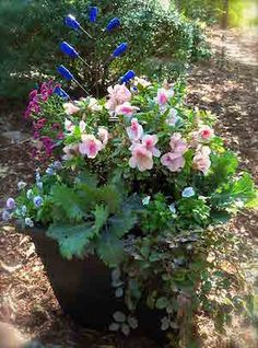 Recipe for a Gorgeous Encore Azalea Container Garden
