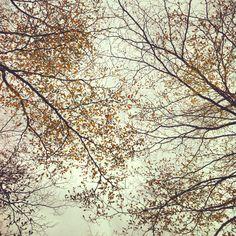 Trees's talk. Abstract, Artwork, Life, Summary, Work Of Art, Auguste Rodin Artwork, Artworks, Illustrators