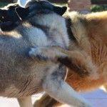 Khumbu and Kyra playing