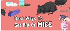 All Ayurved : Health Fitness and Wellness recently published new articles & listed on Top 10 Most Effective and Easy Ways to Get Rid Of Mice Naturally