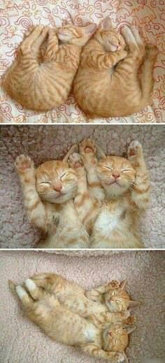Two orange tabby kittens that are experts in synchronized sleeping.