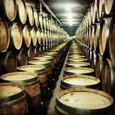 La sala de barriques de Vins i Caves Castillo Perelada / The bodega's room of the winery Castillo Perelada
