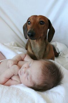 Maxie looking after his baby brother - Gustav's Dachshund World and Friends